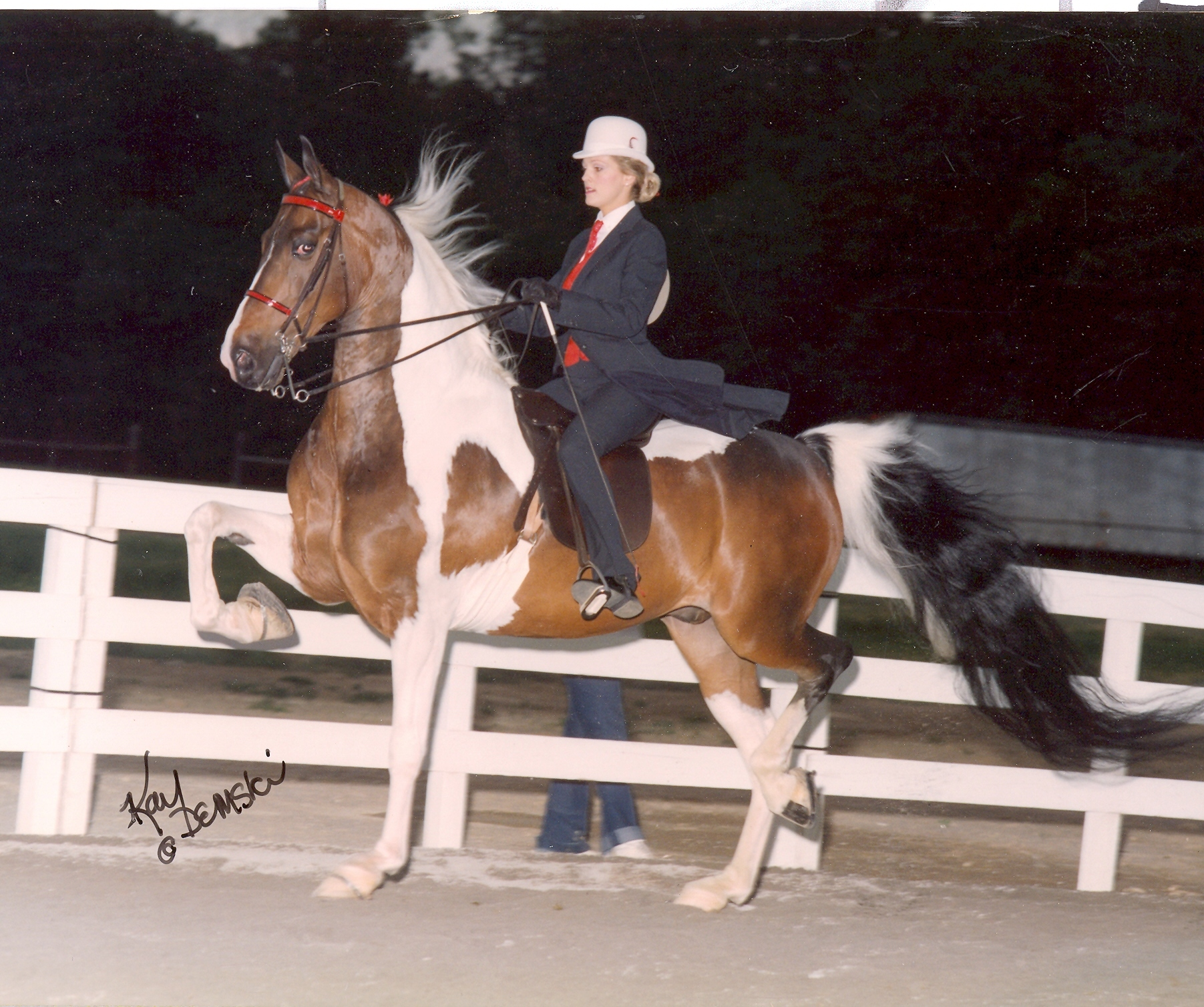 dress - Saddlebred American pinto pictures video